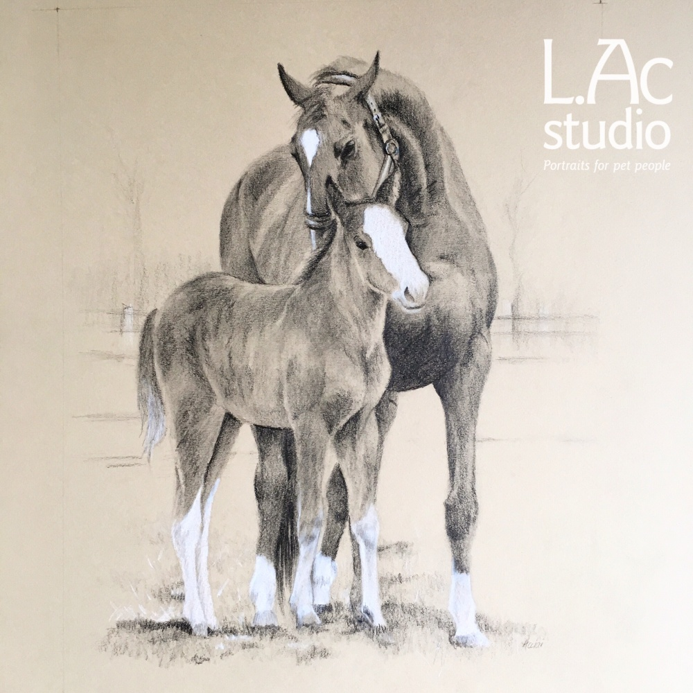 1000x1000 Mare And Foal Drawing A Birthday Surprise