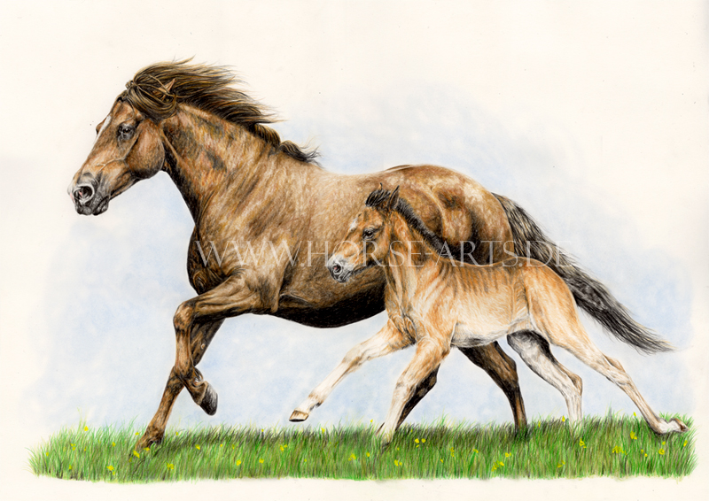 800x566 Mare And Foal Drawing By Oceansoul84