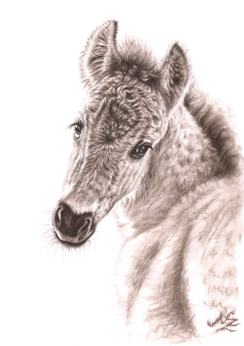 845x1200 Wild Horse Foal Sepia Charcoal Drawing By Nico Credit Nicole