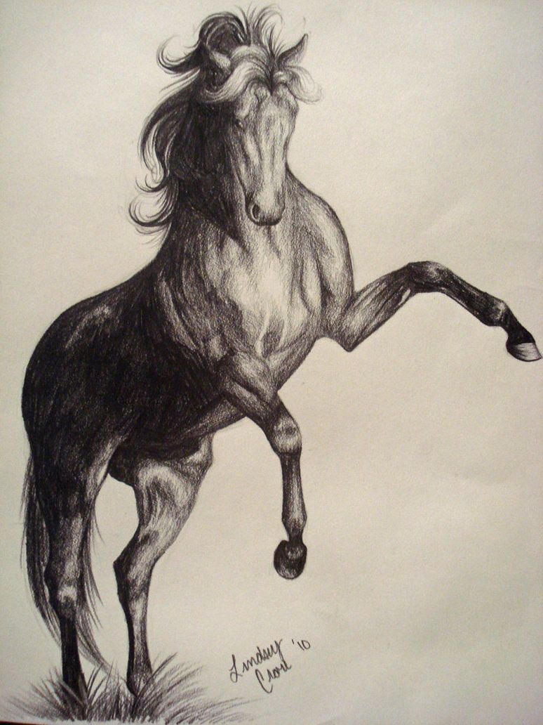 774x1032 Gallery Horse Rearing With Rider Drawing,