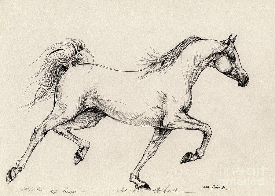900x641 Arabian Horse Drawing 31 Drawing By Angel Ciesniarska
