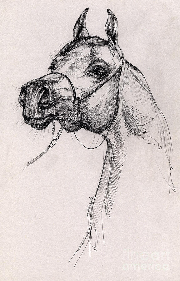 576x900 Arabian Horse Drawing 59 Drawing By Angel Ciesniarska
