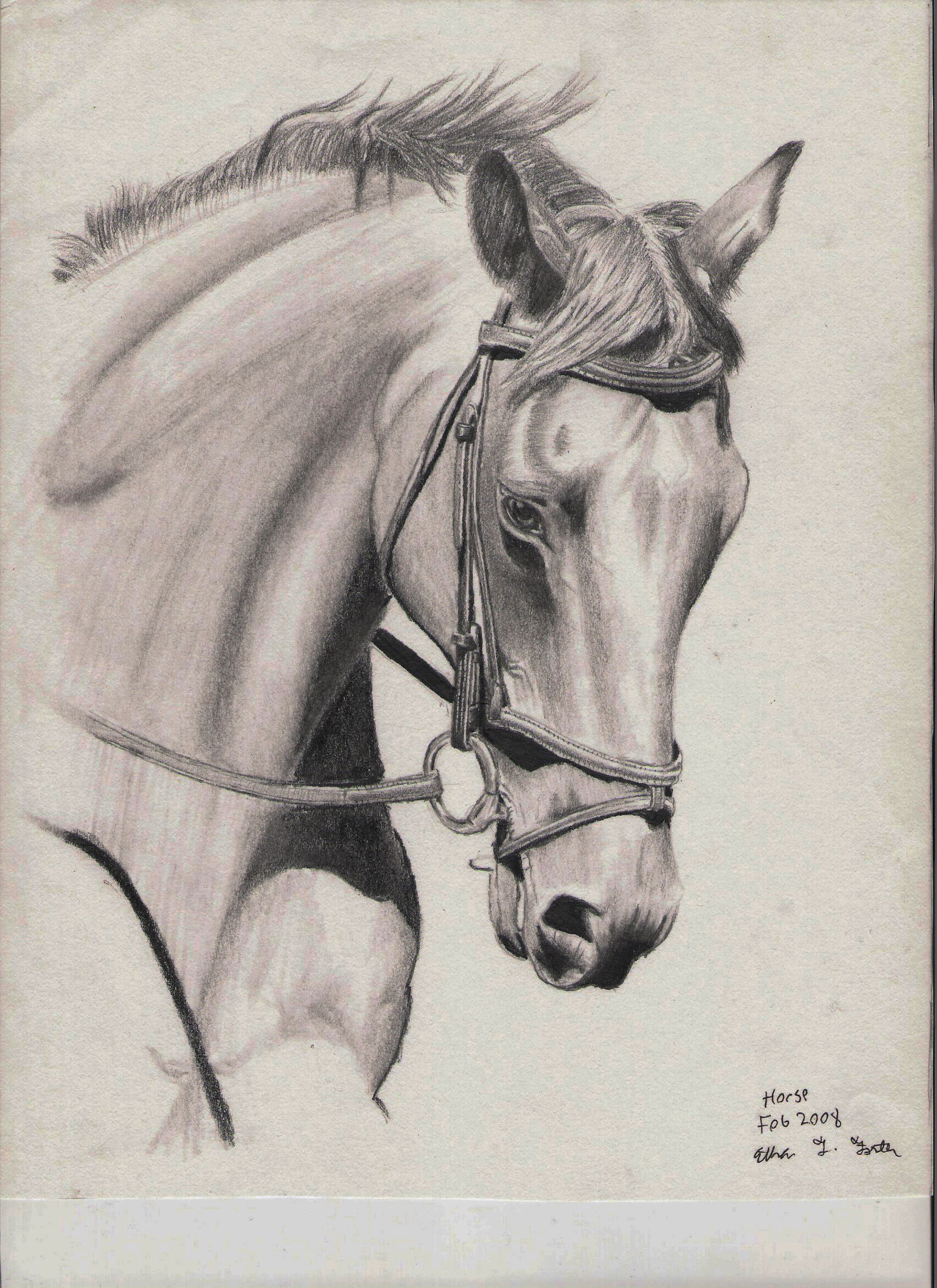 1700x2338 Horse Drawings Horse Drawing By Et Foster Traditional Art