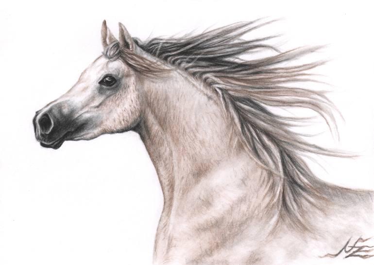 770x546 Saatchi Art Arabian Horse Drawing By Nicole Zeug
