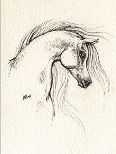 236x312 Horse Drawing Liked On Polyvore Things To Draw