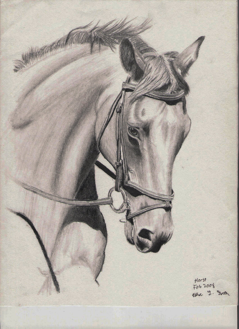 762x1048 Horse Drawing By Et Foster