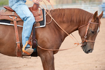 350x233 Rounded Leather Draw Reins Exercises Training