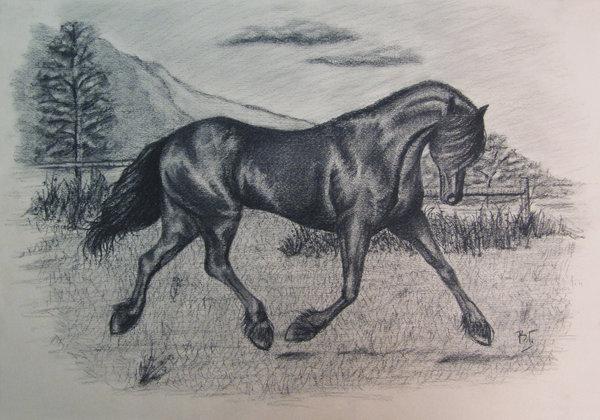 600x420 Black Horse Charcoal Drawing By Morella V