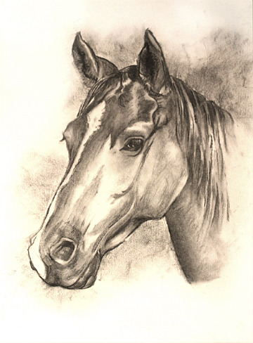 360x488 Charcoal Horse Sketch Commission Posters Amp Pictures