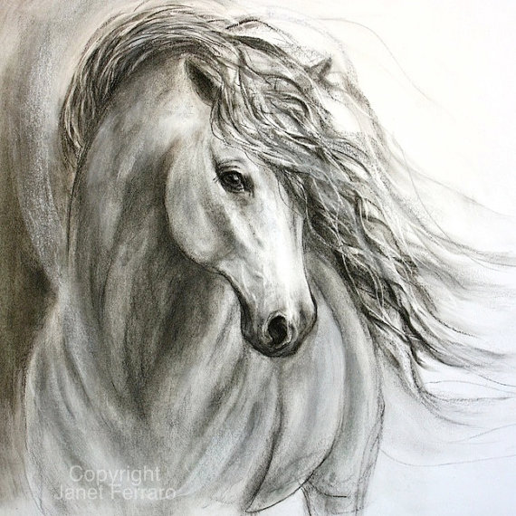 570x570 Sold Original Charcoal Horse Drawing