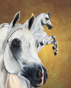 241x300 Horse Drawings Fine Art America
