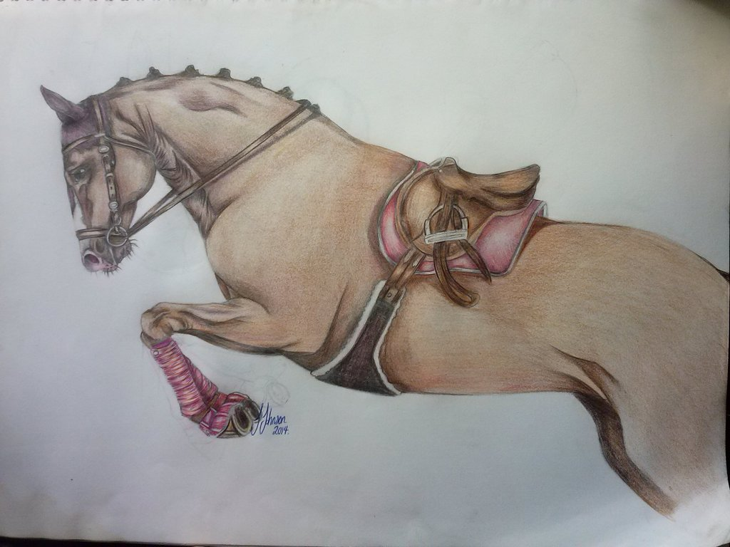 1024x768 Showjumping horse drawing by JessieCutieJay on DeviantArt
