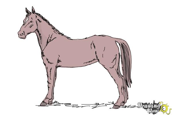 600x400 How To Draw An Easy Horse