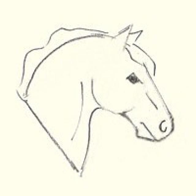 640x640 Learn How To Draw A Horse's Head Drawings, Horse And Horse Head