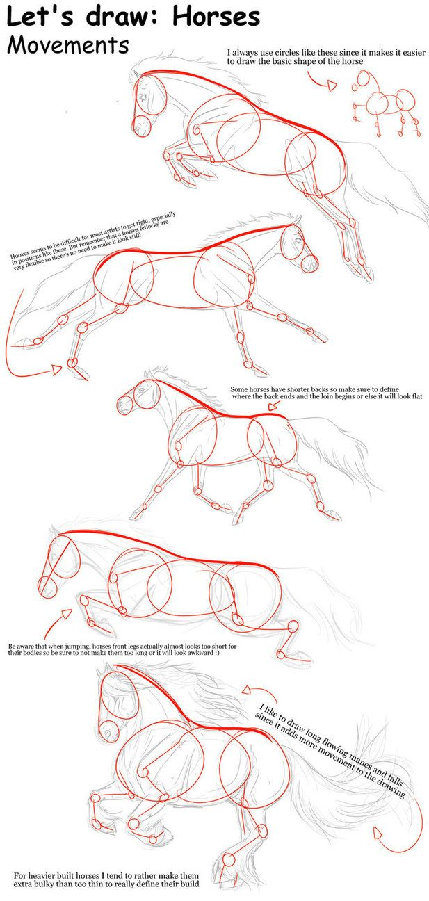617x1296 How To Draw A Horse Step By Step 3 Cizim Home Decor