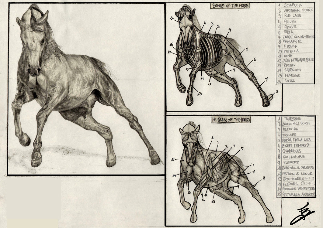 Horse Drawing Games at GetDrawings.com | Free for personal use Horse ...