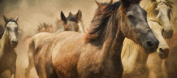 750x330 Best Books On Drawing Horses