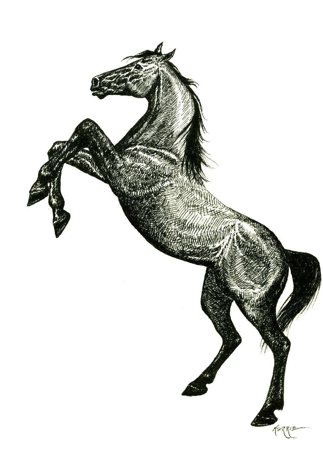 1029x1486 Horse Drawing