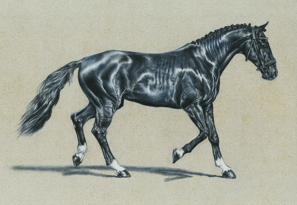 600x414 Cool Horse Drawings For Inspiration 2017