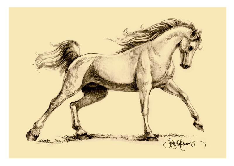 800x569 Horse Drawing