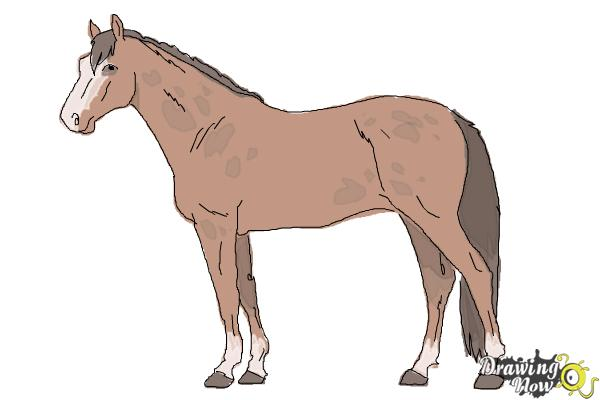 600x400 How To Draw A Realistic Horse