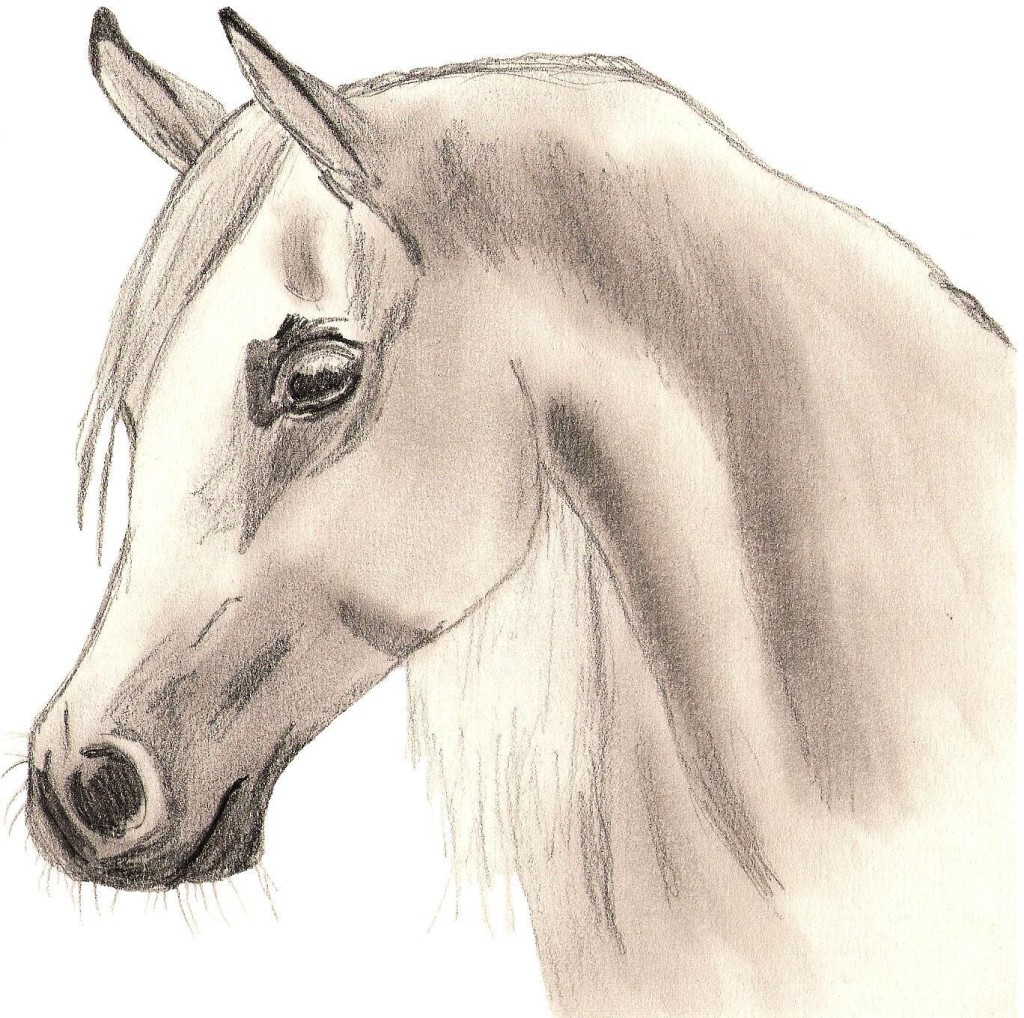 1024x1018 Nice Pictures For Drawing Nice Arabian Horse Drawing