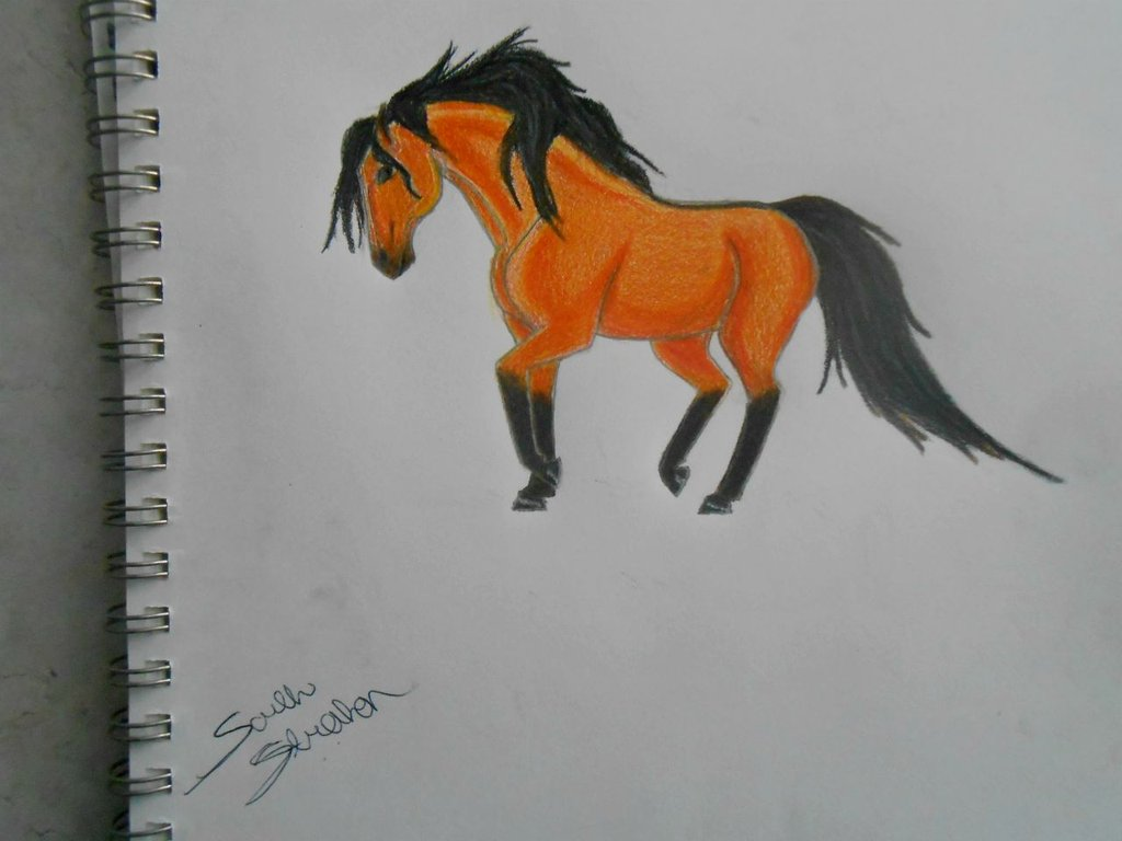 1024x768 Wild Buckskin Horse Drawing By In The Ssaddle