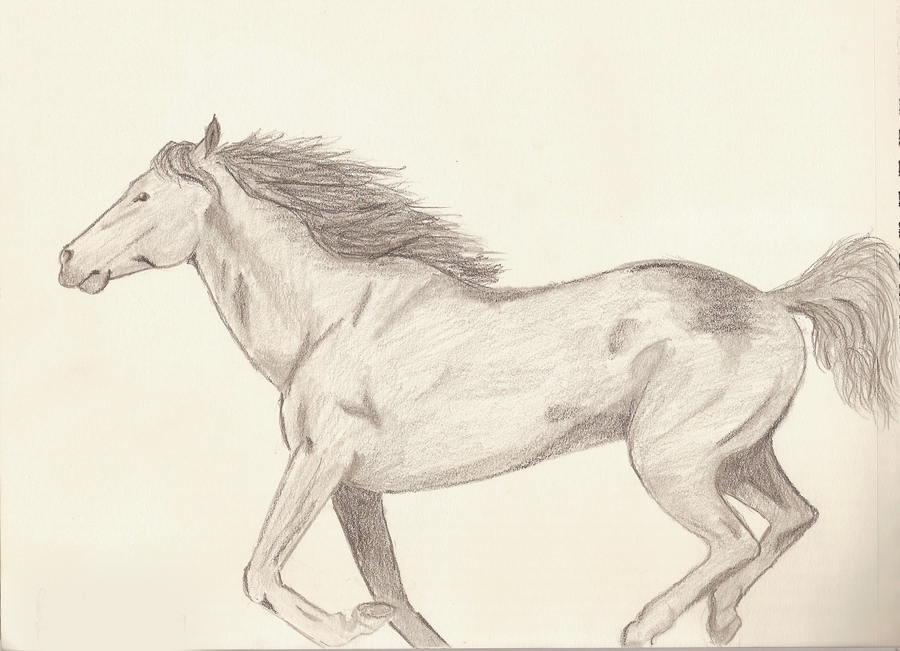 900x651 Running Horse Sketch By Spottedtigress