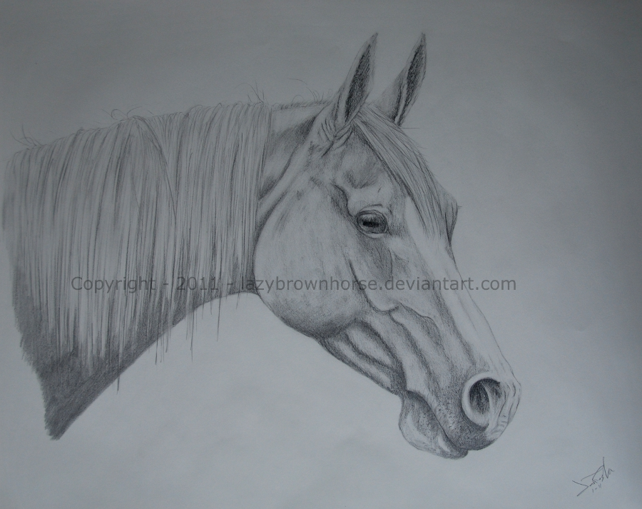 900x713 Horse Head By Lazybrownhorse