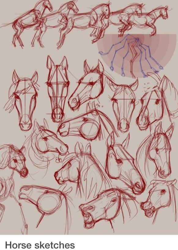 582x817 Horse Sketches I Love Horses! Cheval Painting Tutorial Art