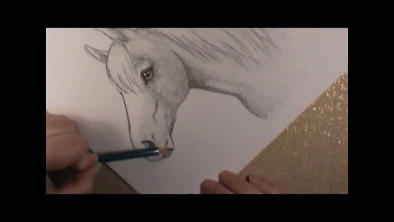 1280x720 How To Draw A Horse Head!
