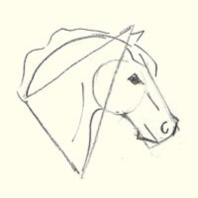 640x640 Learn How To Draw A Horse's Head Horse, Detail And Drawings