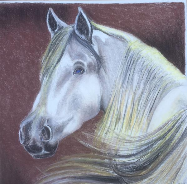 600x591 White Horse Face Drawing By Robert Ray