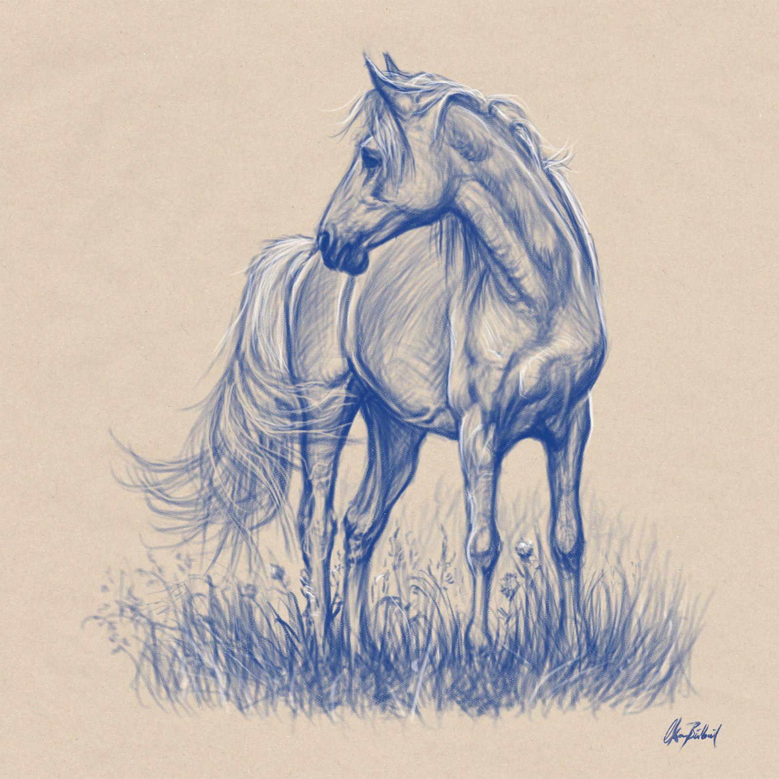 1600x1600 Horse Sketches, Okan On Artstation My Drawings