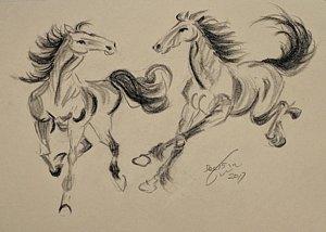 300x214 Horse Galloping Drawings