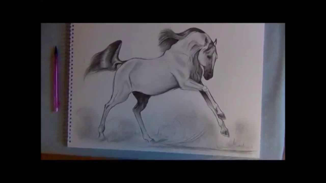 1280x720 How To Draw A Galloping Bay Horse (16th January 2012)