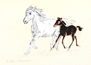 300x216 White Mustang With Black Foal Galloping Drawing By Kurt Tessmann