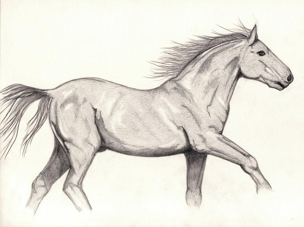 1024x765 Galloping Horse By Bluekungfu