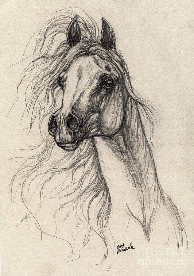 632x900 Arabian Horse Drawing 37 Drawing By Angel Ciesniarska