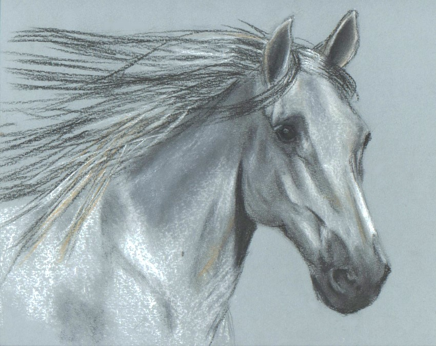 850x676 Arabian Horse Head In Pastel By Catuvalencia