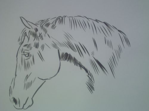 500x375 Horse Head Drawings In Pencil And Ink.