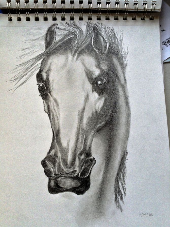 670x897 How To Draw A Horse Head 15 Steps (With Pictures)