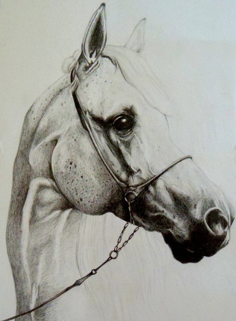 766x1042 Pencil Drawing Horse Head