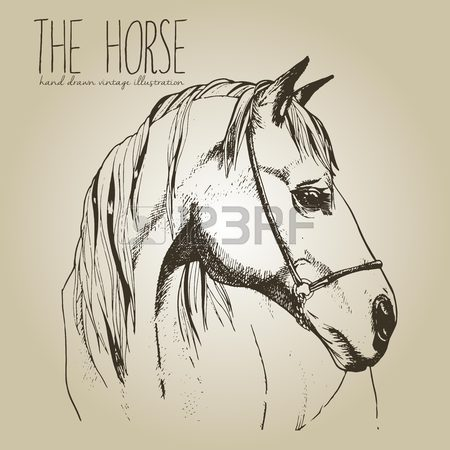 450x450 Sketch Of Horse Head Drawing In Retro Ink Style Royalty Free