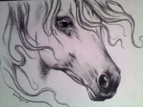 500x375 Horse Head Drawing