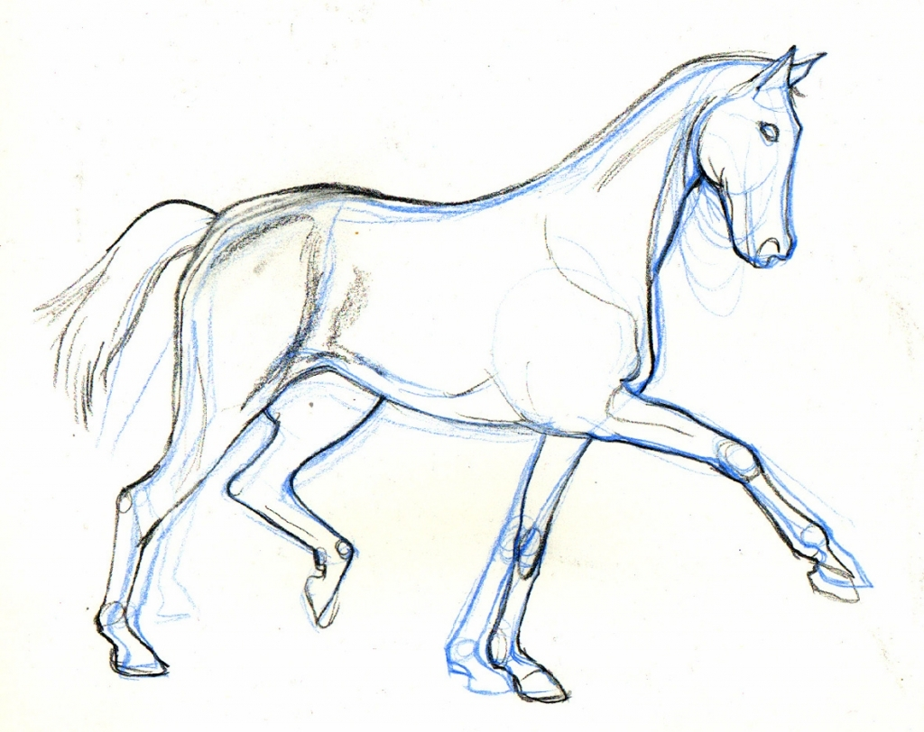 1024x812 Easy Horse Drawing Horse Drawing Lt Images Amp Galleries