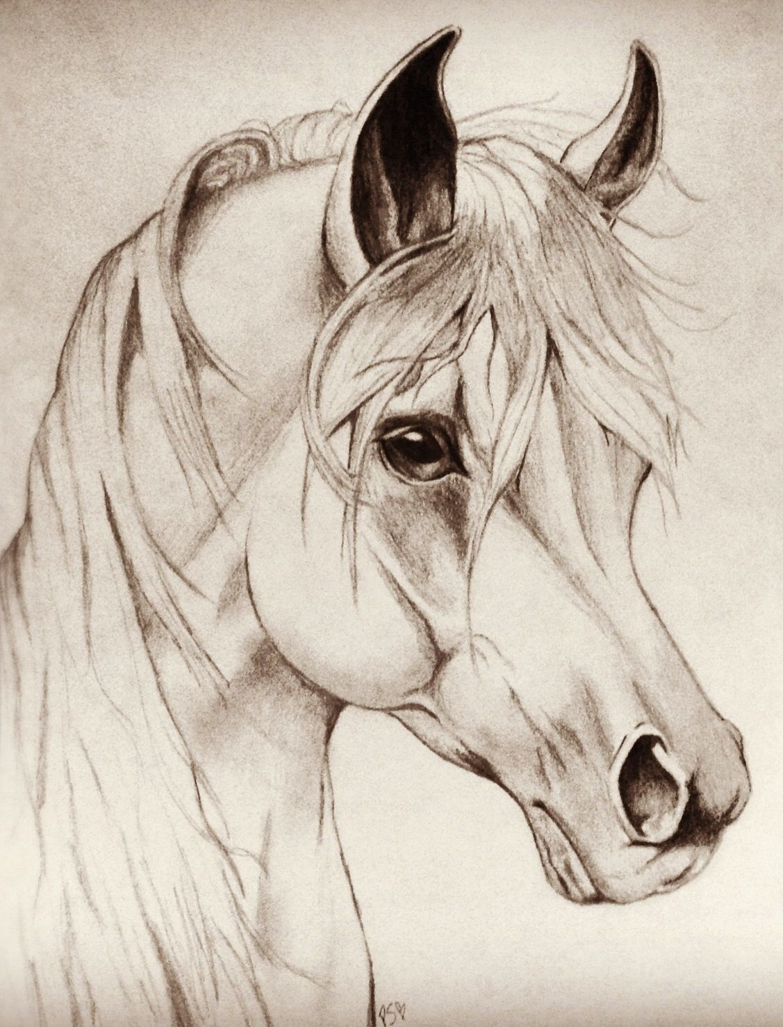 1127x1478 Horse Drawing By Patrycia Sulewski.( Drawn With Pencil. Horse