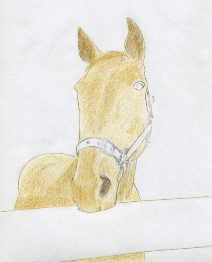 700x864 How To Draw Horse Head