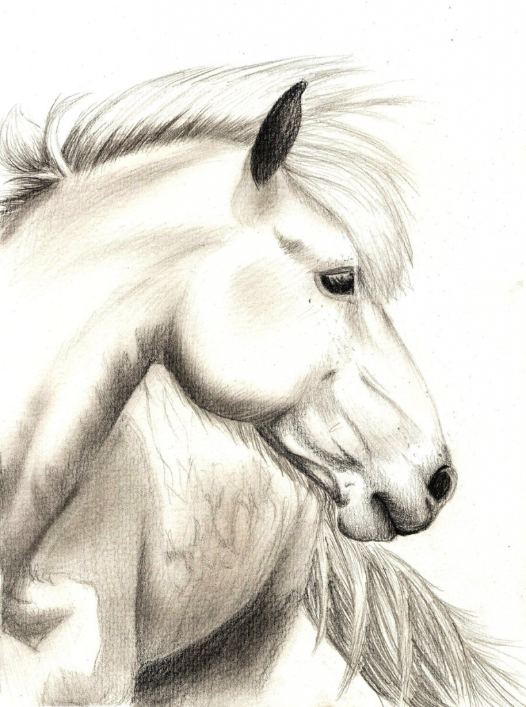 762x1024 Ideas Of Draw A Realistic Horse Best Photos Of Horse Head Drawings