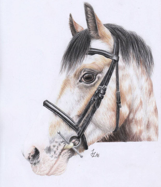 620x717 Horse Drawings, Art Ideas Design Trends